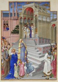 Purification of BVM (Vigil)
